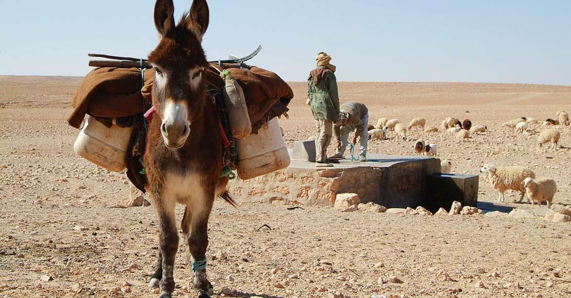 Jak się przygotować na wyjazd do Tunezji?