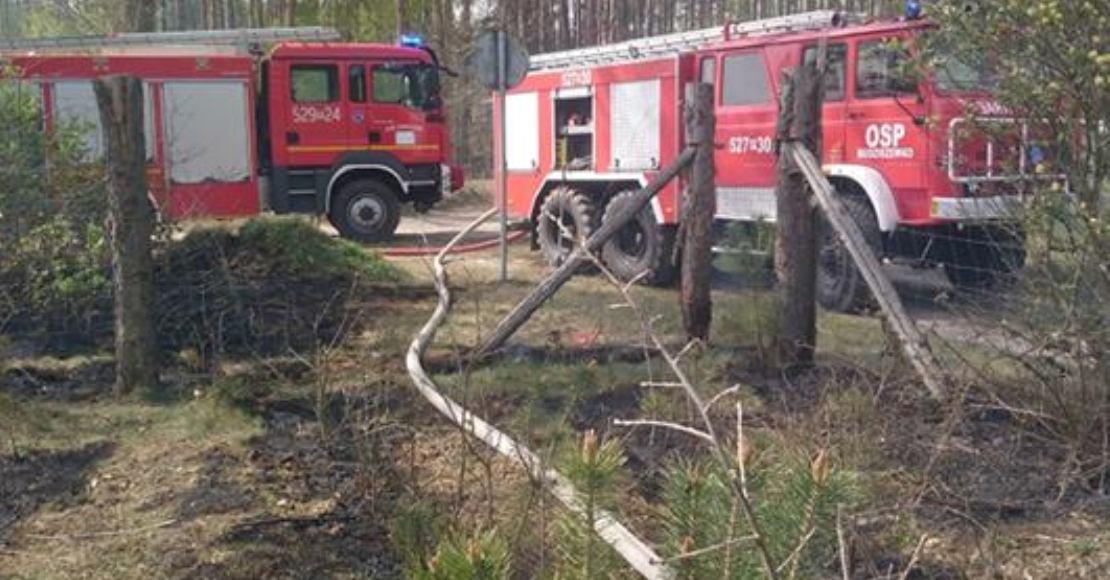 Pali się ściółka leśna w Nienawiszczu (foto)