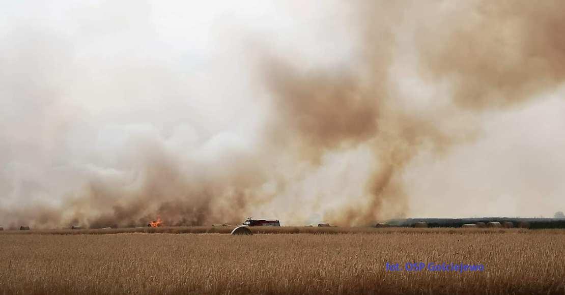 Pożar zboża w Sokołowie (film)