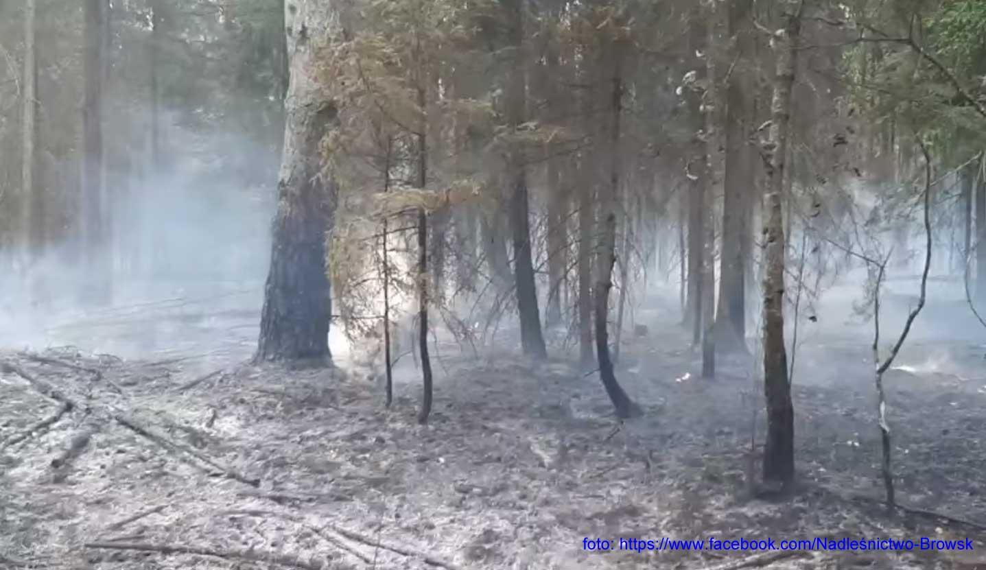 Pożar w Puszczy Białowieskiej
