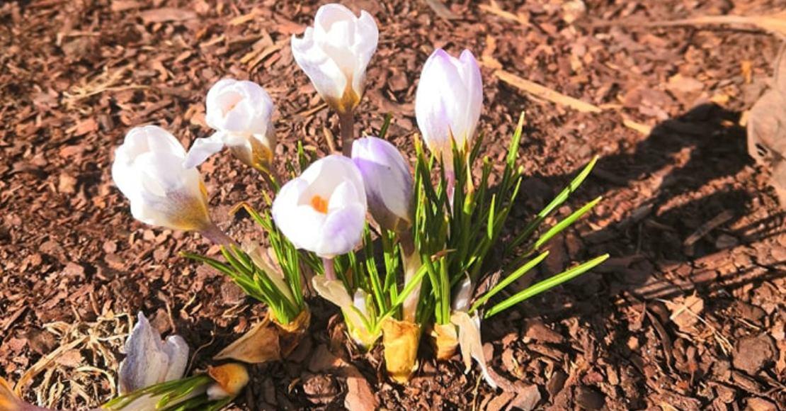 Wiosna za oknem