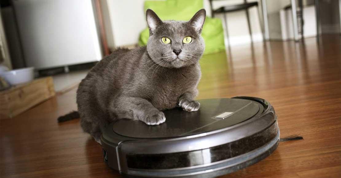 Jaki odkurzacz automatyczny sprawdzi się w domu ze zwierzętami