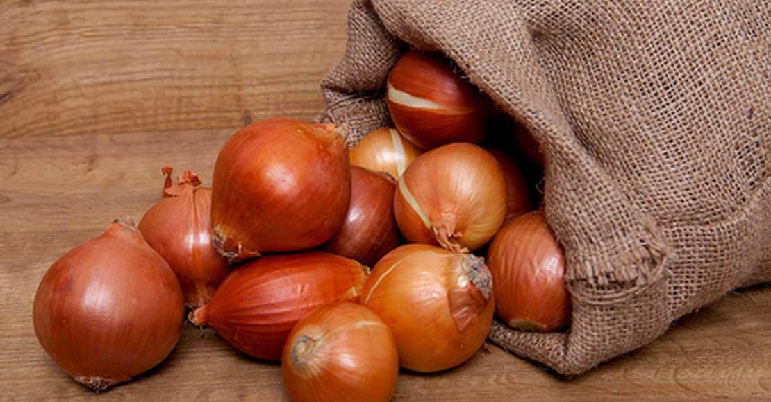 Cebula – jak uprawiać, jakie nawozy stosować