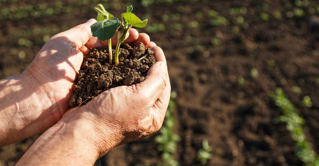 Bądź rolnikiem z prawdziwego zdarzenia – inwestuj w gospodarstwo!