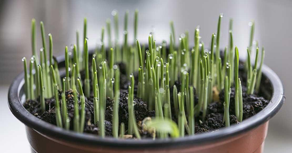 Rośliny zielone domowe - jakie wyróżniamy rodzaje?