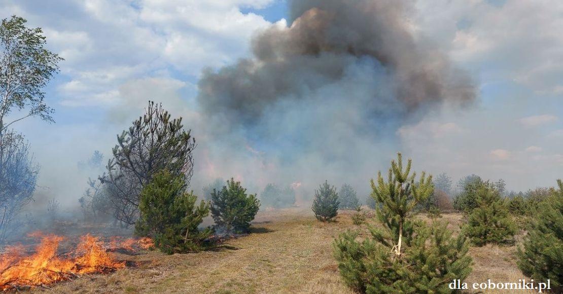 Pali się las na Chlebowie