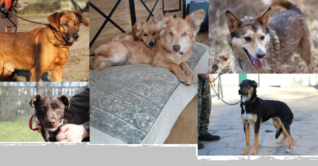 Adoptuj psa ze schroniska Azorek na nowych zasadach