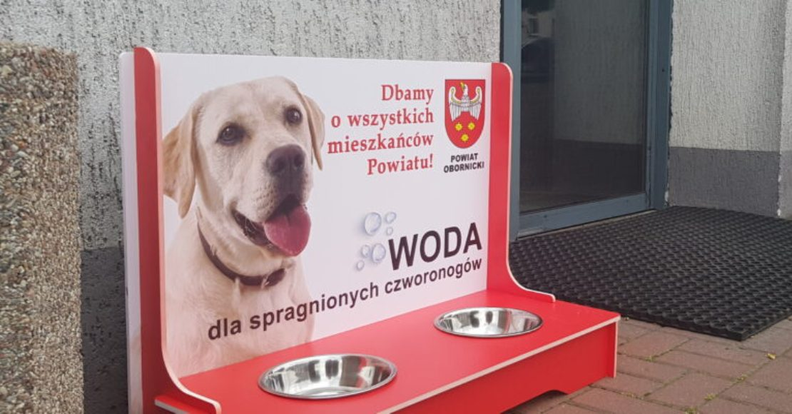 Miski z wodą dla psów przed budynkiem Starostwa