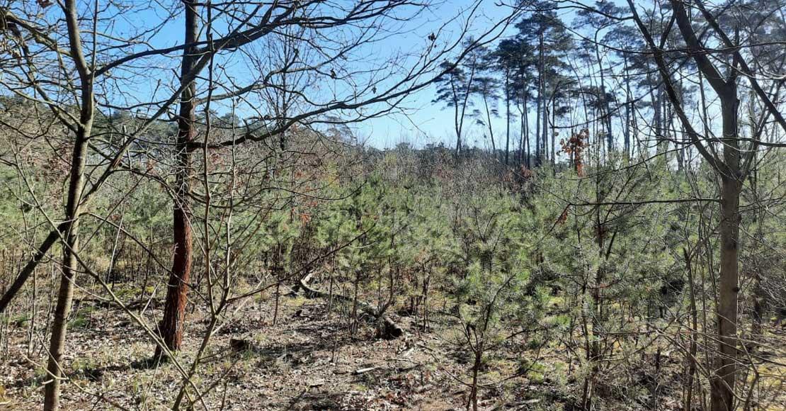 Zakaz wstępu do lasów wydłużony do 19.04