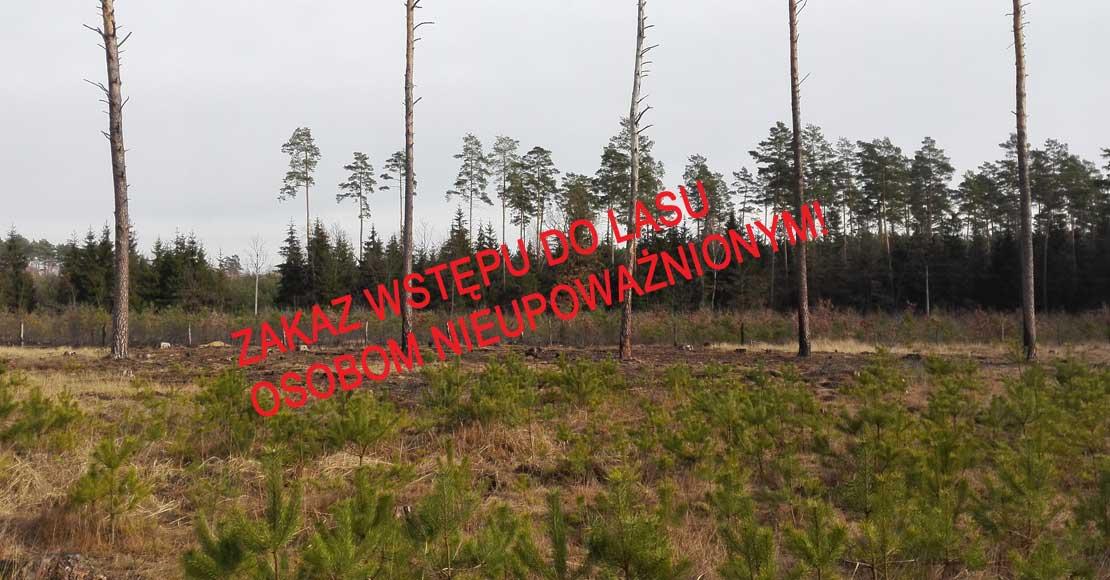 Zakaz wstępu do lasów w całej Polsce!
