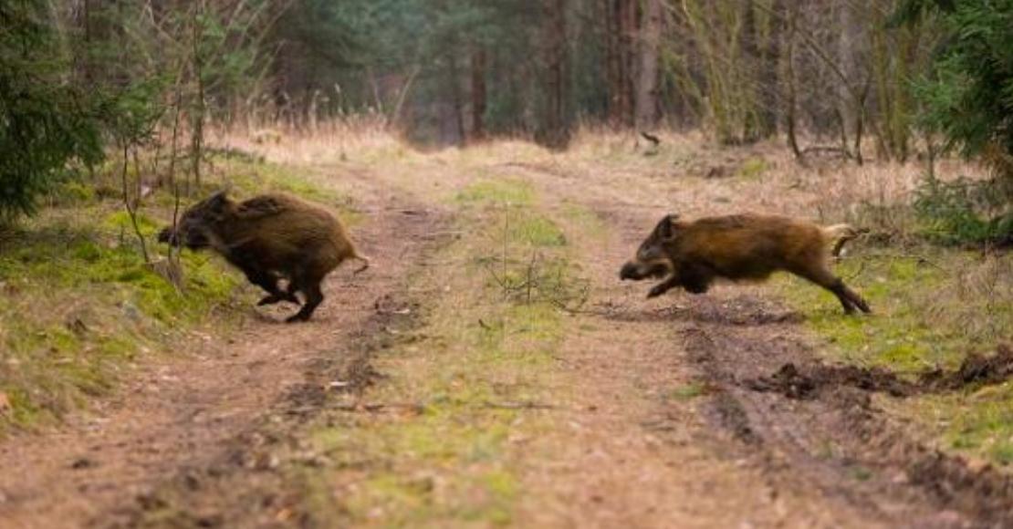 Spotkanie dla hodowców trzody chlewnej w sprawie ASF