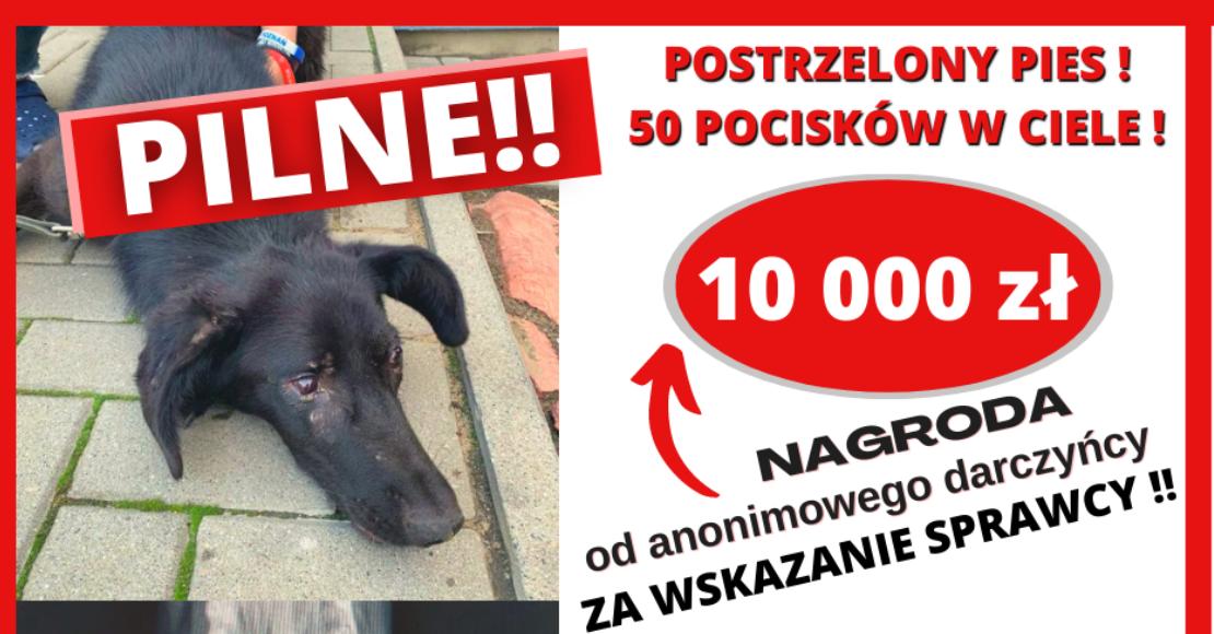 Czarny po pierwszej operacji. 10.000 zł nagrody za pomoc w odnalezieniu oprawcy psa (wywiad)