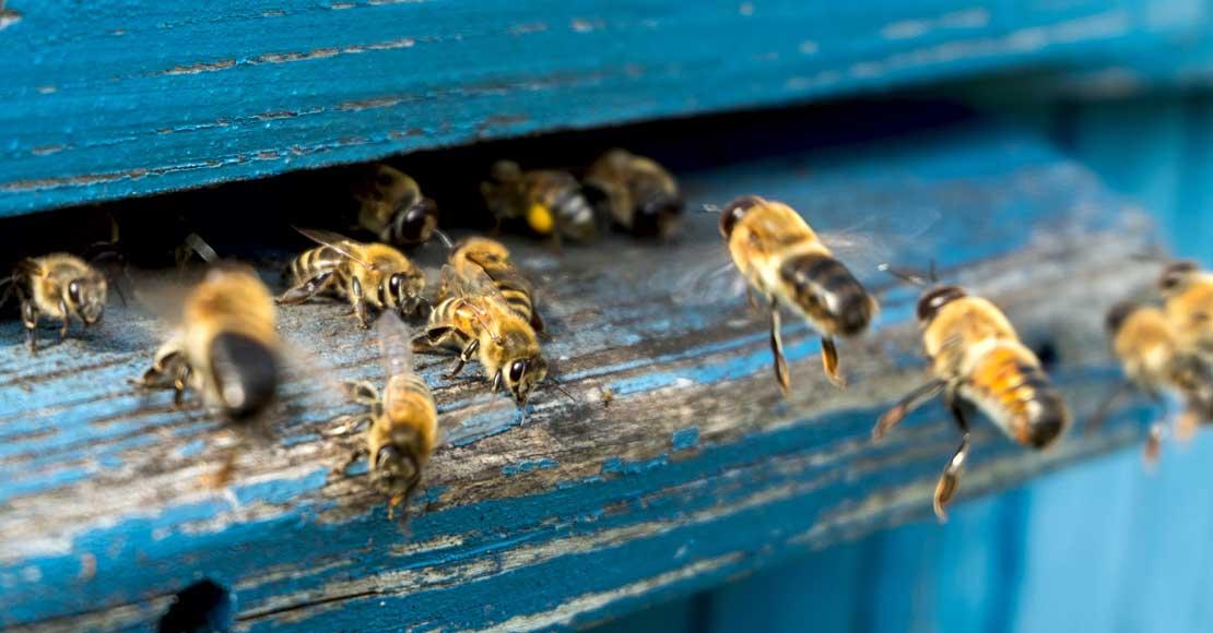 Pomóżmy pszczołom