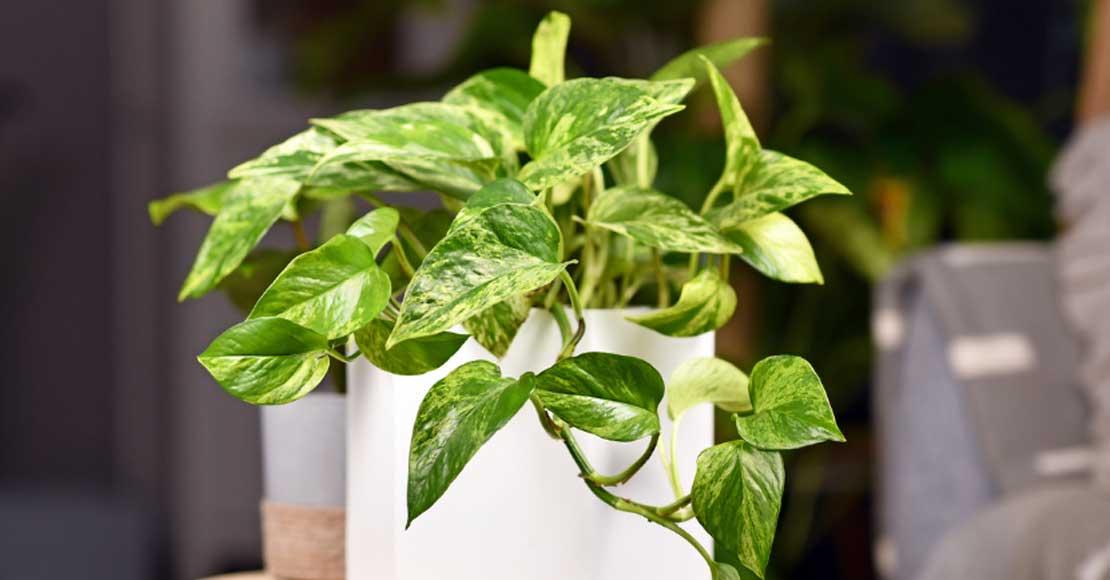 5 roślin dla początkujących. Z tymi roślinami poradzi sobie nawet amator