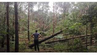 Brak większych zniszczeń w obornickich lasach